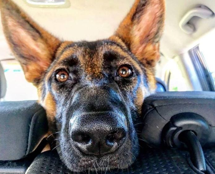 dog inside the car